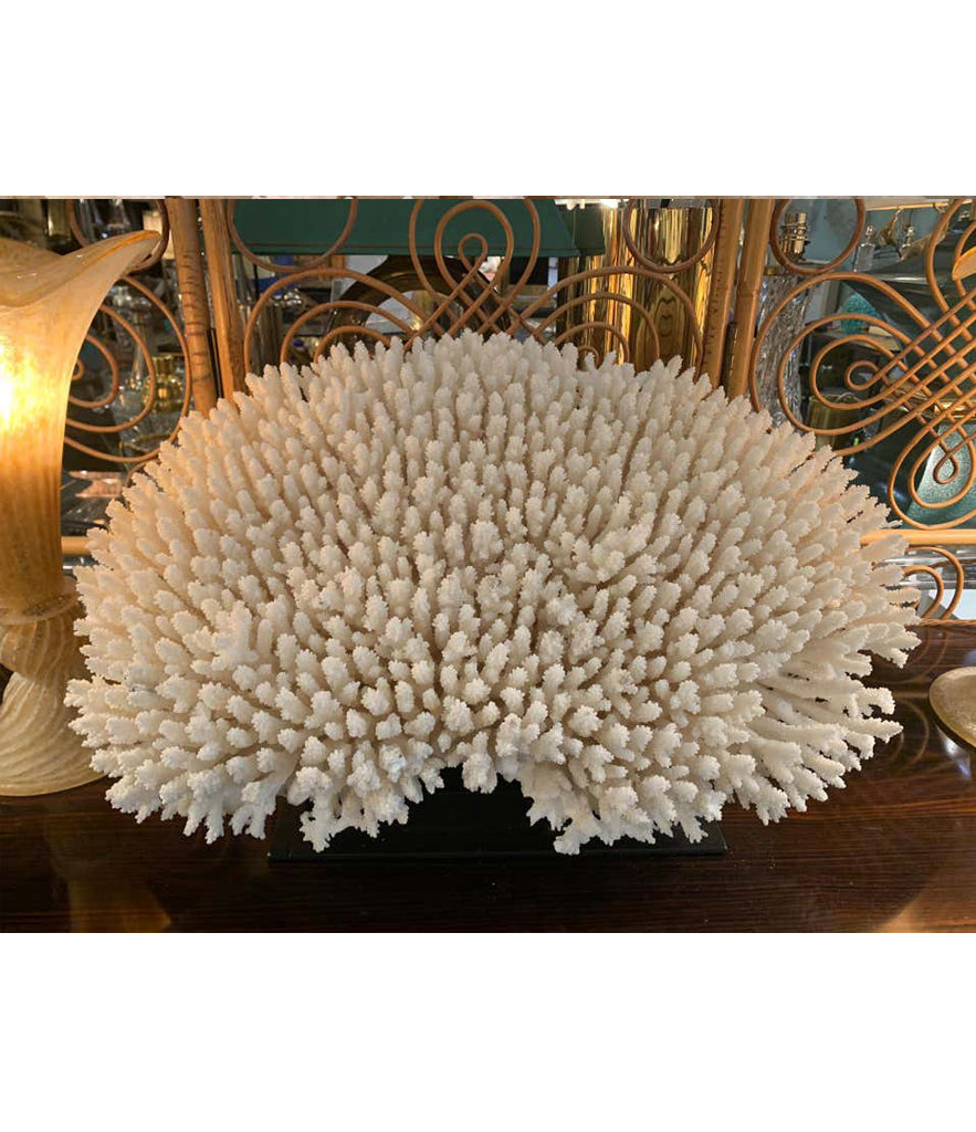 STUNNING LARGE ANTIQUE BRUSH CORAL SPECIMEN MOUNTED ON A BLACK MUSEUM STAND