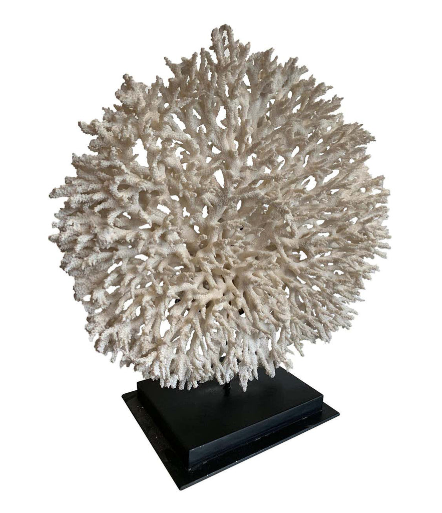 STUNNING LARGE ANTIQUE CIRCULAR PIECE OF LACE CORAL MOUNTED ON MUSEUM STAND
