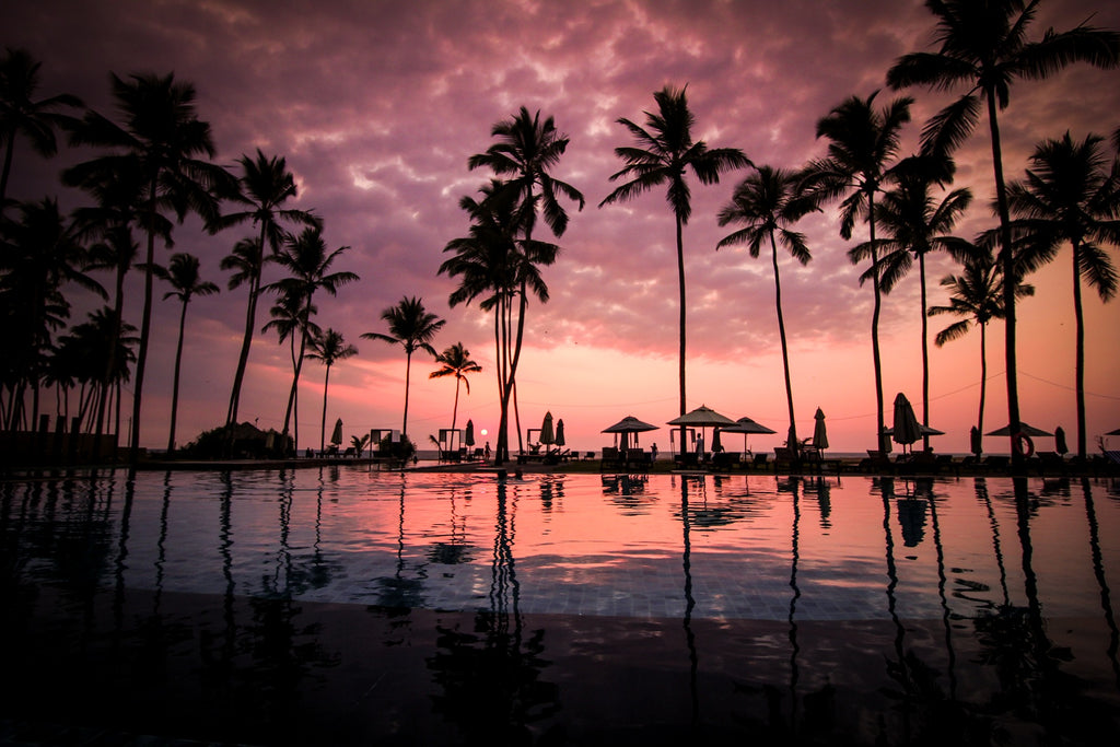 palm trees on a beach in Hawaii
