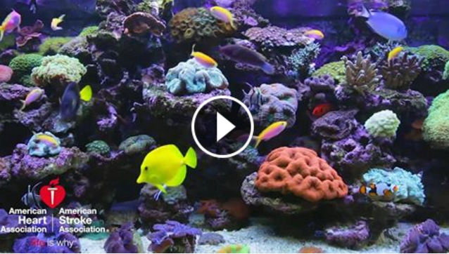 Study Shows that Aquariums Reduce Blood Pressure