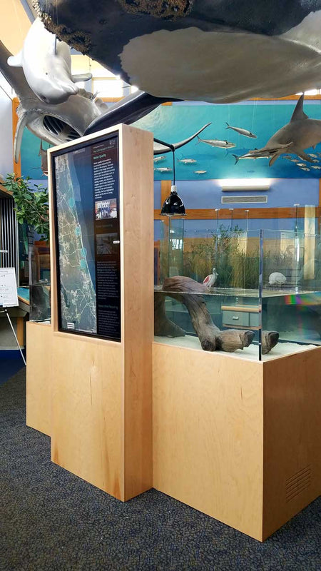 Live Terrapin exhibit for the Guana Tolomato Matanzas National Estuarine Research Reserve near St. Augustine, Florida.