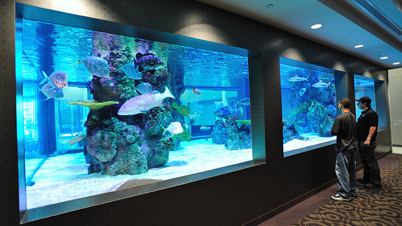 30,000 gallon office aquarium, New York