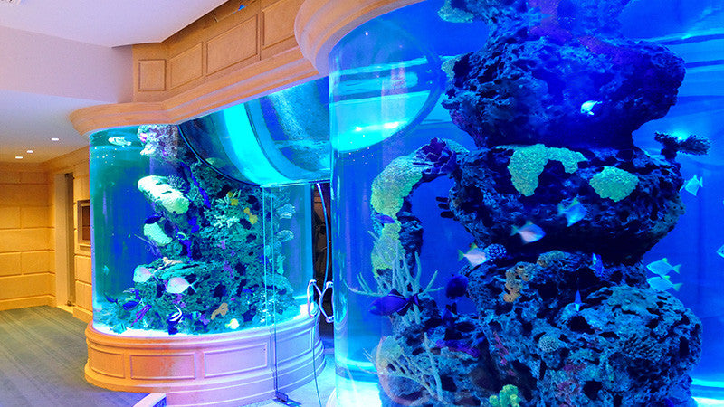 15,000 gallon home aquarium
