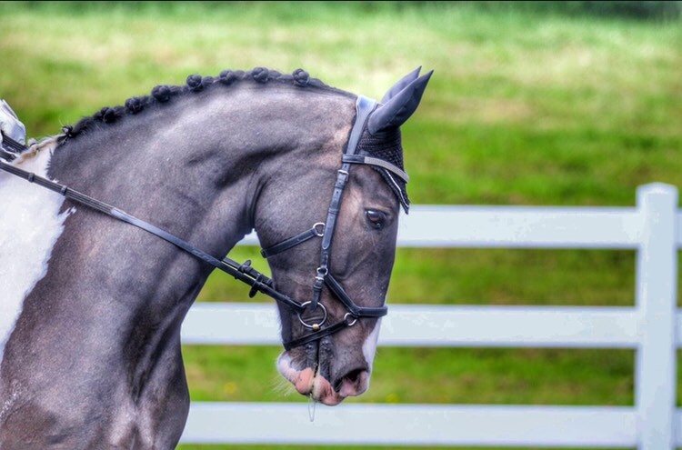 Horse with perfect plaits