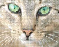 4 Baseplate kit - Cat with green eyes