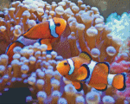 9 Baseplate kit - Clown Fish
