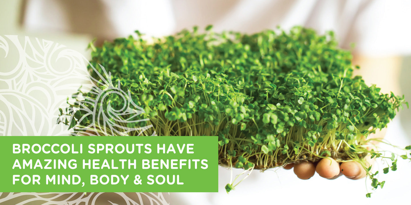 Kiwi Superfoods Broccoli Sprout Powder