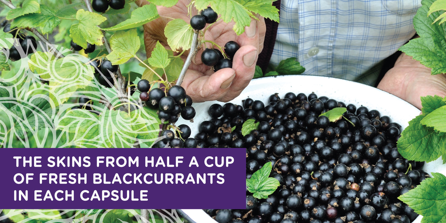 Kiwi Superfoods Blackcurrant Extract