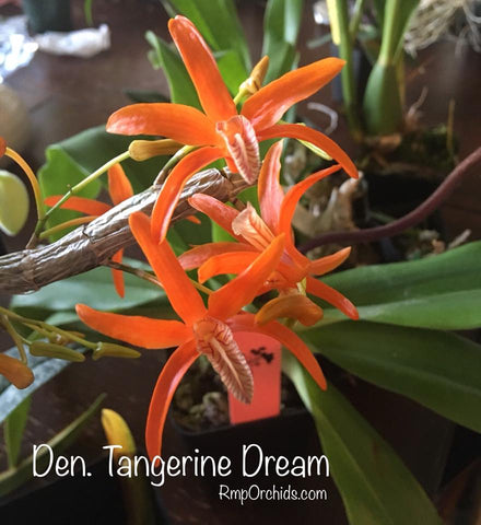 D. Tangerine Dream