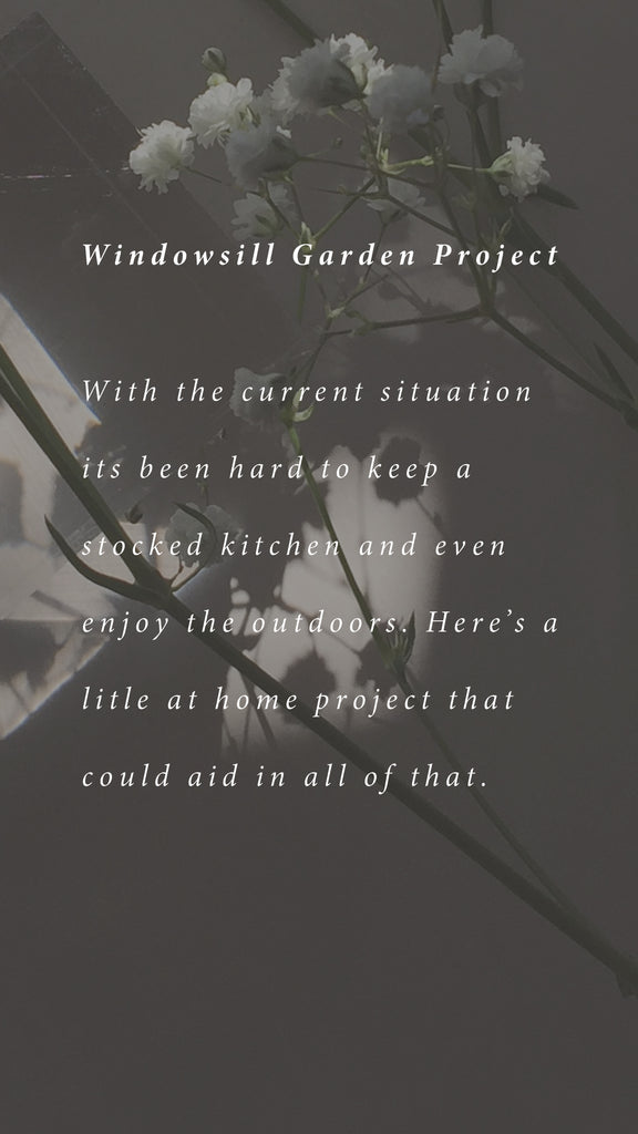 We Can Grow Together | Windowsill Garden Project
