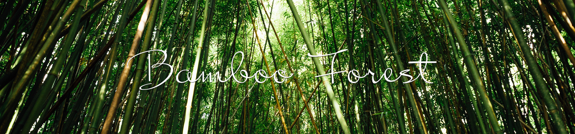 Bamboo Forest in Hawaiʻi