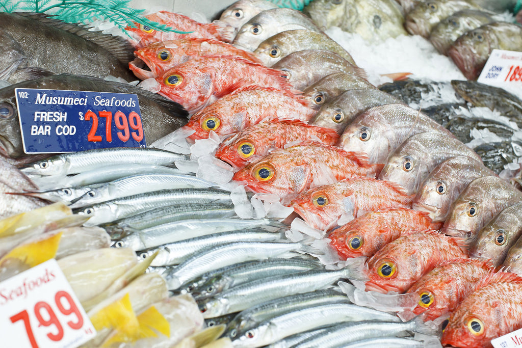 Fish handling safety & storage