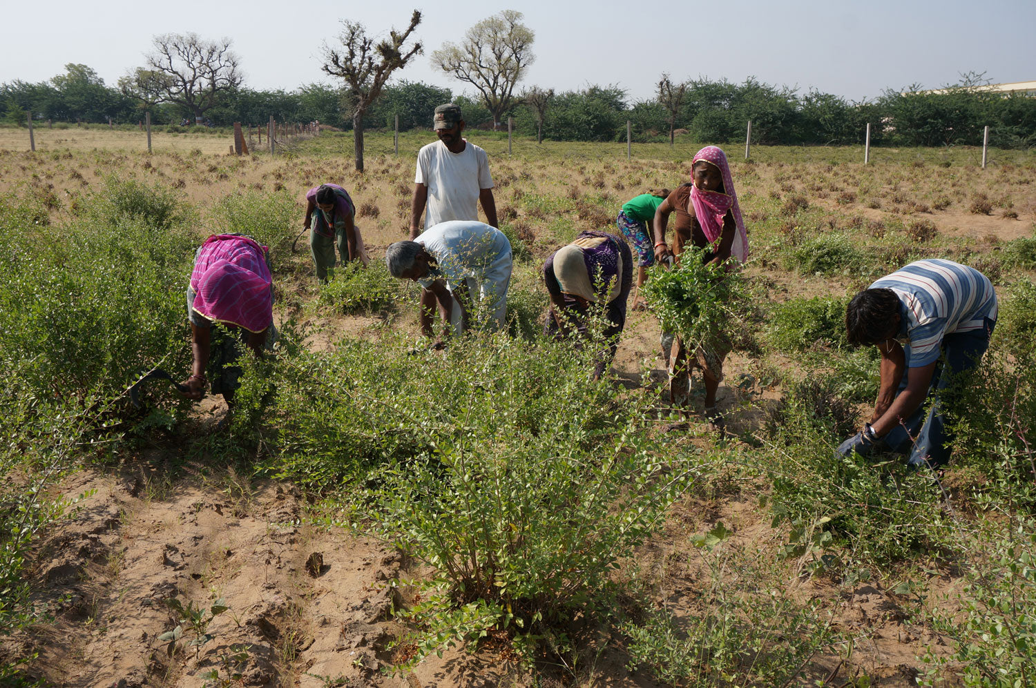 Cultivator Natural Product Pvt. Ltd. | Organic Agriculture