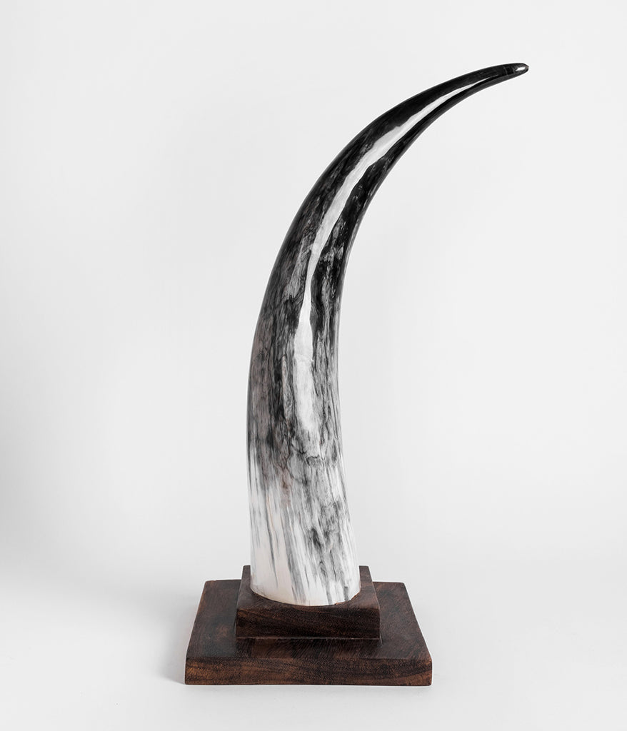 Ankole Horn Decorative Object - Square Base