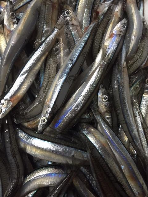 Japanese Herring 500g