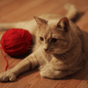 Orange cat sitting next to a red ball of yarn on a wooden surface