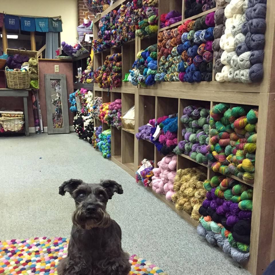 dog looking ahead over a yarn carpet