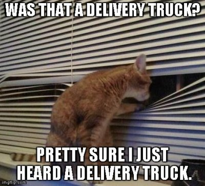 A kitty cat, sitting on the back of a couch, peering through the blinds of a window. The caption says 'Was that a delivery truck? Pretty sure I just heard a delivery truck.'