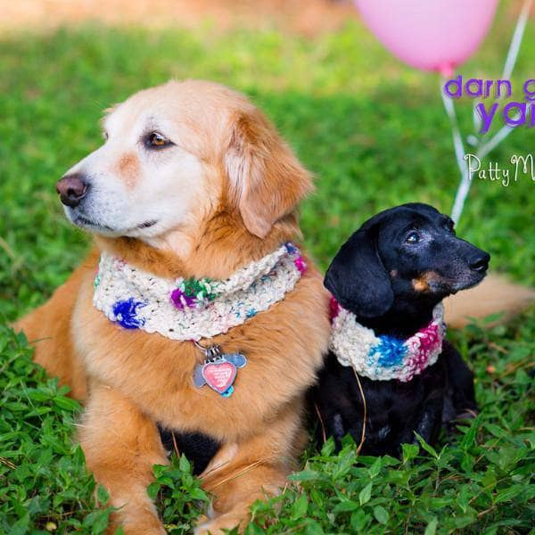 Celebration Canine Kit - Knit a Cowl for Your Dog