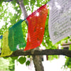 Yellow, Green, Red and White Tibetan Prayer Flags Hanging in Tree