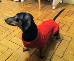 Doggy Stuff Clothes Knitted Sweater 2