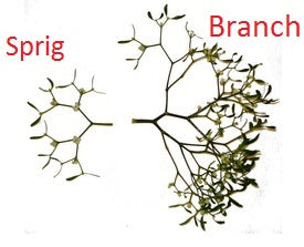 Mistletoe Branch vs Mistletoe Sprig