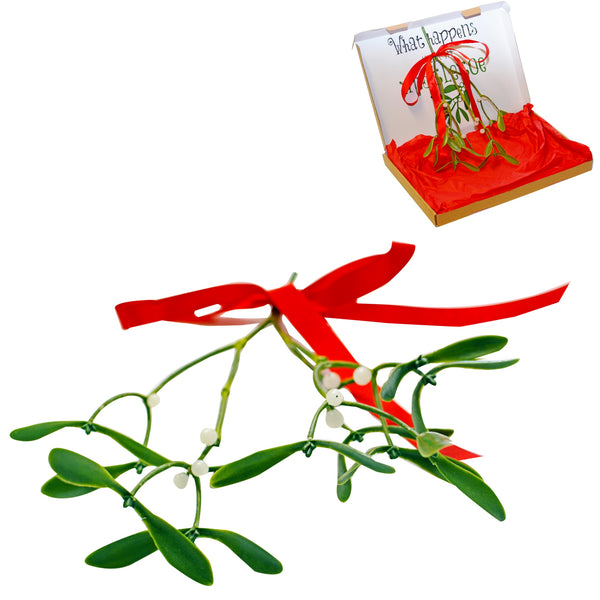 Artificial Mistletoe Sprig