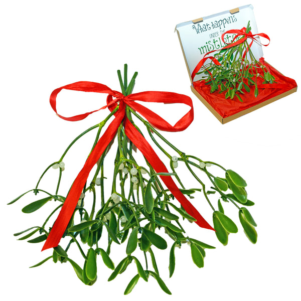 Artificial Mistletoe Bunch
