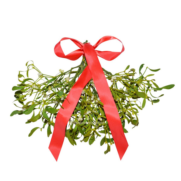 Large Mistletoe Bunches