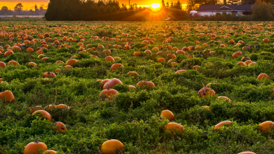Going for Gold- Our Interview with World-Renowned Pumpkin Grower Ron Wallace