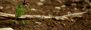 The Danger of Heavy Metals in Potting Soils