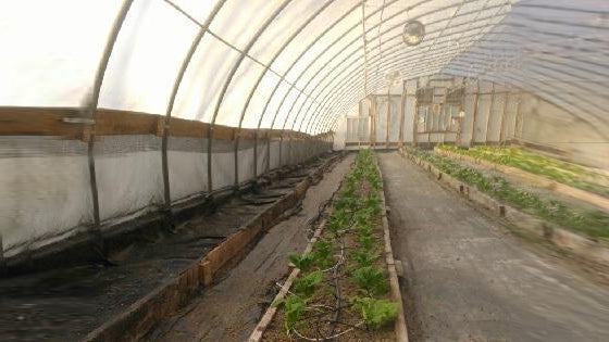 greenhouse Growing Cold Crops