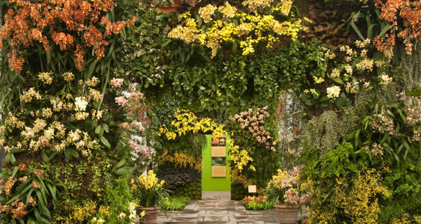 How to Develop a Vertical Garden