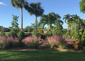 Sustainscape Keeps Florida Sustainably Beautiful with PittMoss®