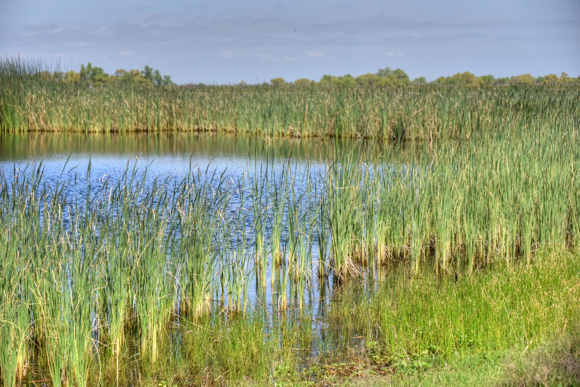 Delmarva Conserves Wetlands with Native Plants and PittMoss®