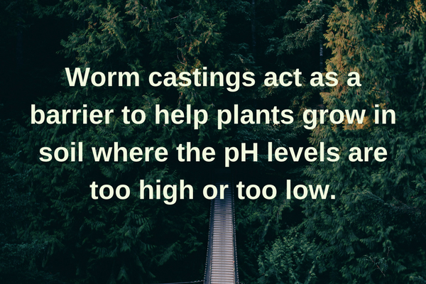 Worm Casting helps protect plants and balance PH levels.