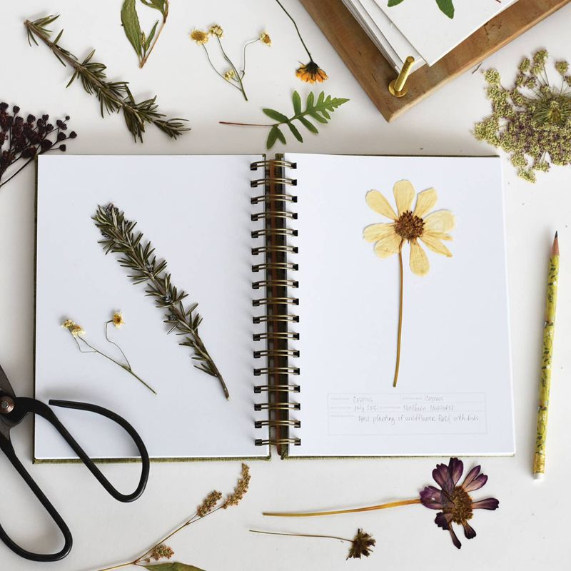 June & December Herbarium Journal - 2-page spread with plants in and around