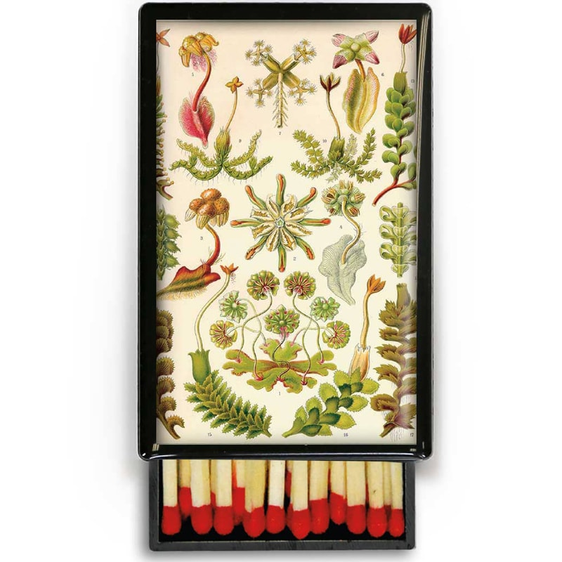 Lucy Lu Designs Small Slide Box of Wooden Matches – Herbs (1 pc)