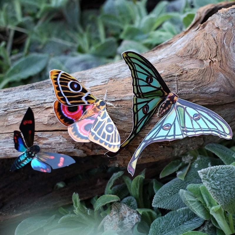 Moth & Myth Jade Spanish Moon Moth Set showing all three pieces on a piece of wood