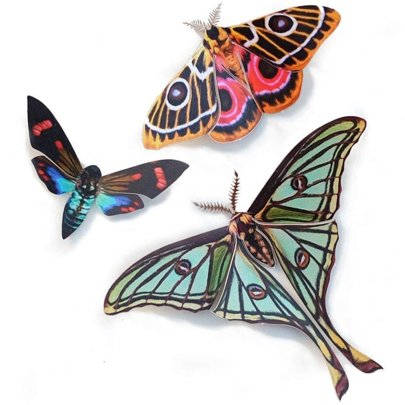 Moth & Myth Jade Spanish Moon Moth Set (3 pcs)