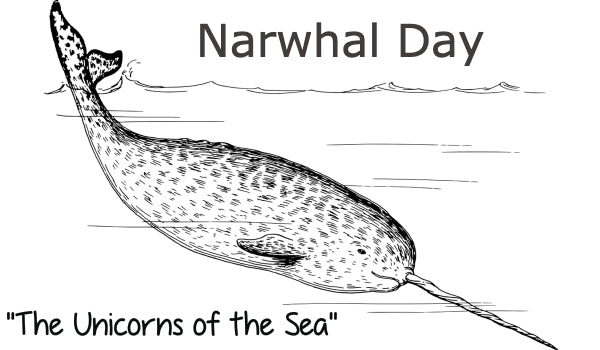 Narwhals - The Unicorns of the Sea