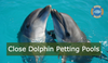 Dolphins Shouldn't Be In Petting Zoos