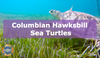 Protecting Hawksbill Sea Turtles in Columbia