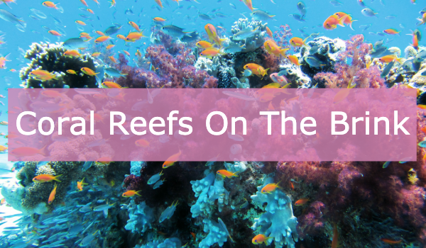 Coral Reefs On The Brink