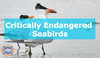 Threats To Seabirds
