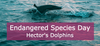 Hector's Dolphins an Endangered Species