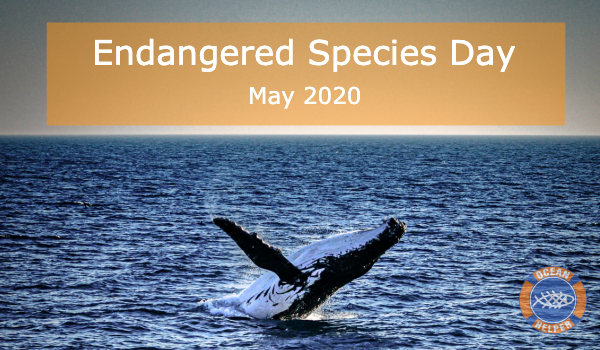 Endangered Species Day 2020: Protect Whales