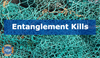 Entanglement Kills 300,000 Cetaceans Each Year