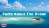 10 Fun Facts About The Ocean