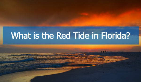 The Red Tide: Florida's Coastal Crisis